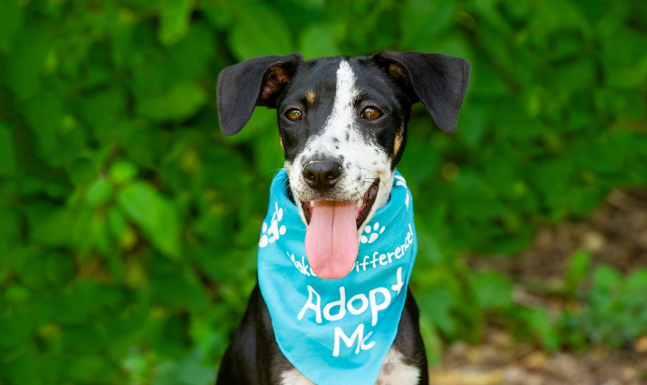 A Dog Is Advertising for It's Adoption by Wearing an Adopt Me Bandana