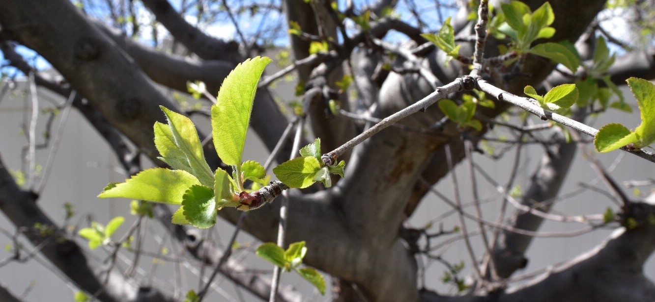 A Guide To Pruning Fruit Trees Concepts Medium
