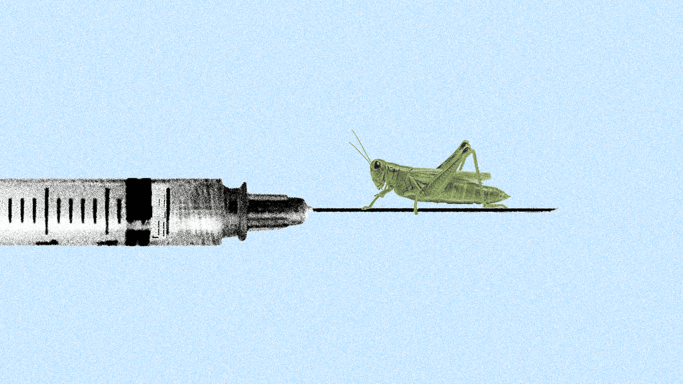 A small grasshopper sitting on the needle of a syringe in front of a light blue background.