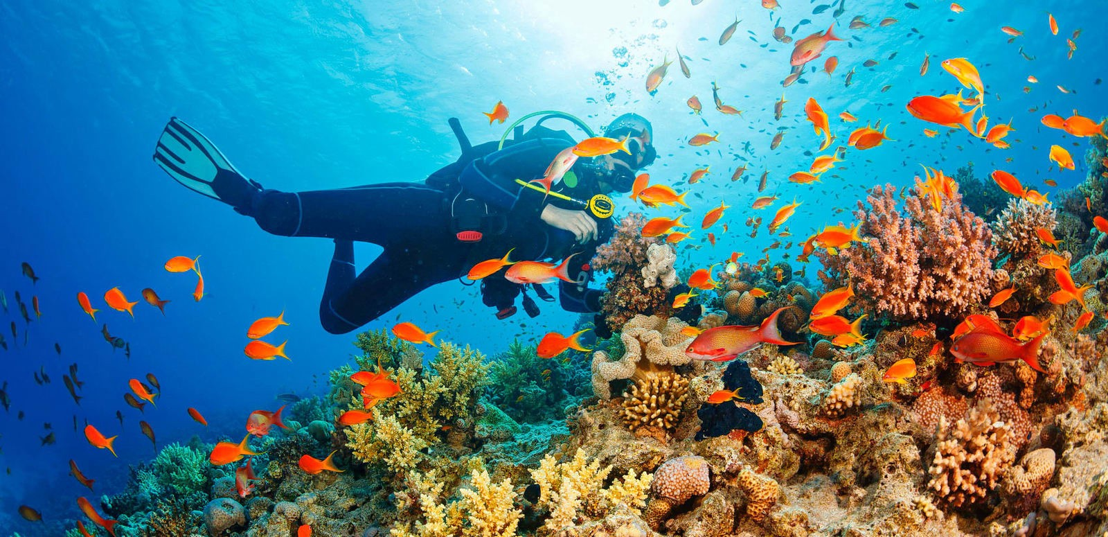 Let's Go Scuba Diving in Malaysia! 3 Best Locations