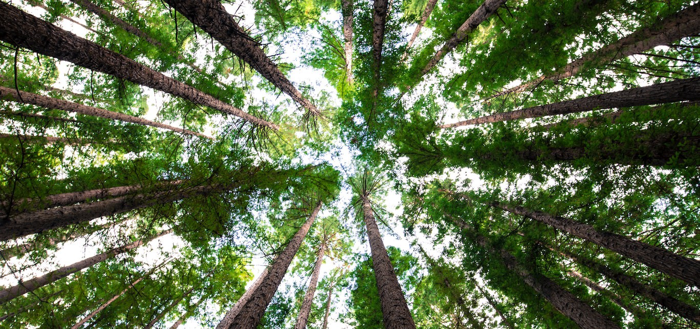 How to do proper tree-shaking in Webpack 2 - Emarsys Craftlab