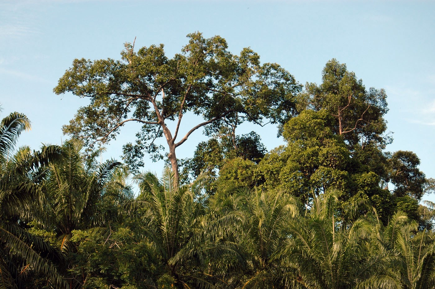 Wild Profusion: Biodiversity Conservation in an Indonesian Archipelago (In-Formation)