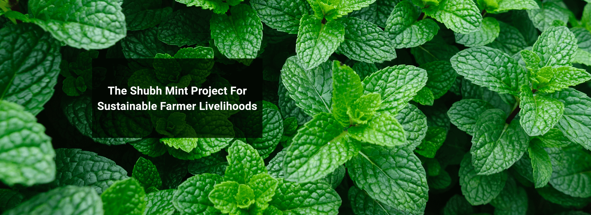 "Banner Image: ""The Shubh Mint Project For Sustainable Farmer Livelihoods"""