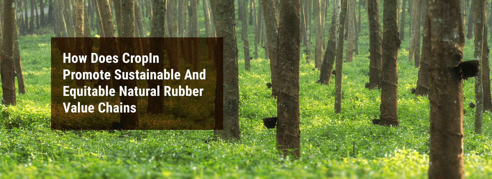 """Banner Image: """"How Does CropIn Promote Sustainable And Equitable Natural Rubber Value Chains?"""""""