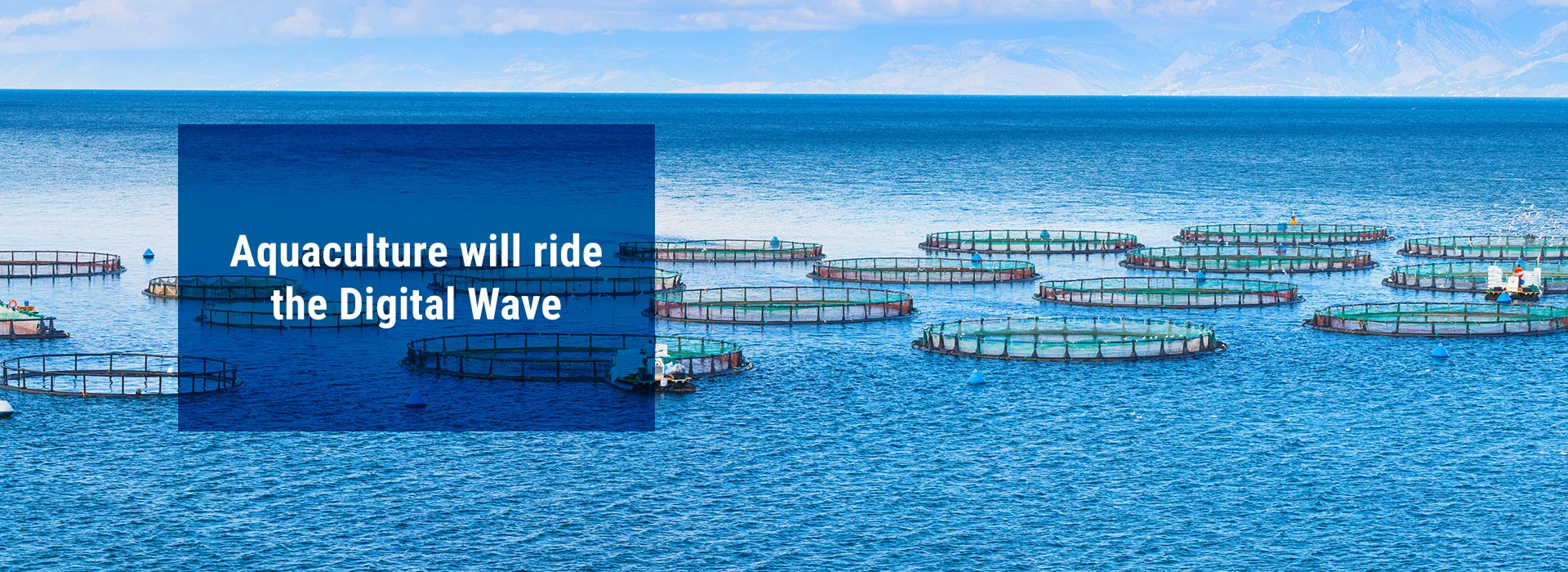 """Banner Image: """"Aquaculture Will Ride the Digital Wave"""""""