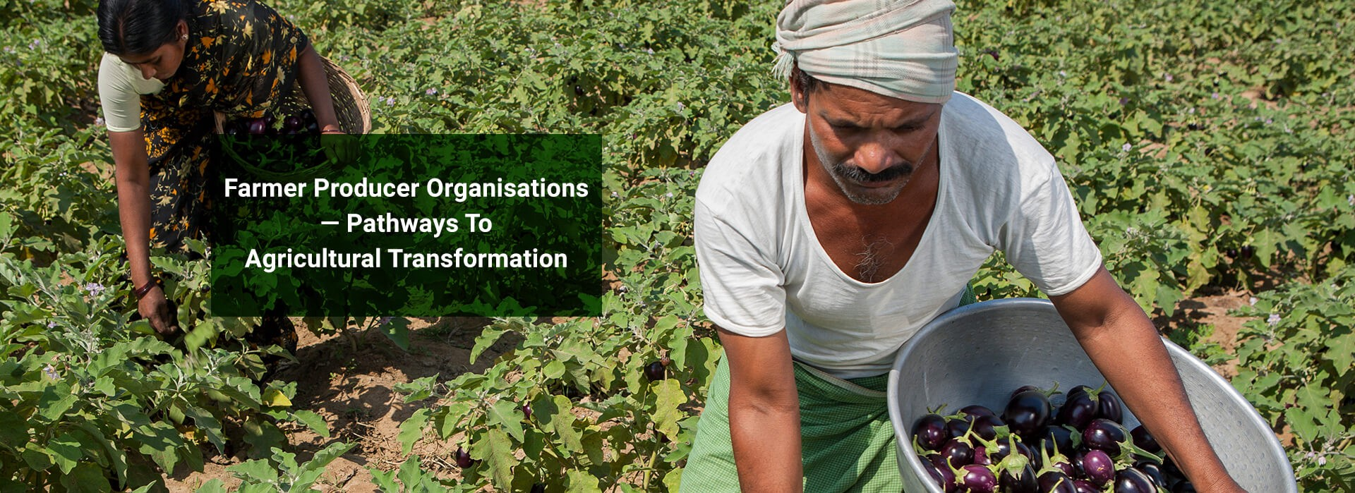 """Banner Image: """"Farmer Producer Organisations—Pathways To Agricultural Transformation"""""""