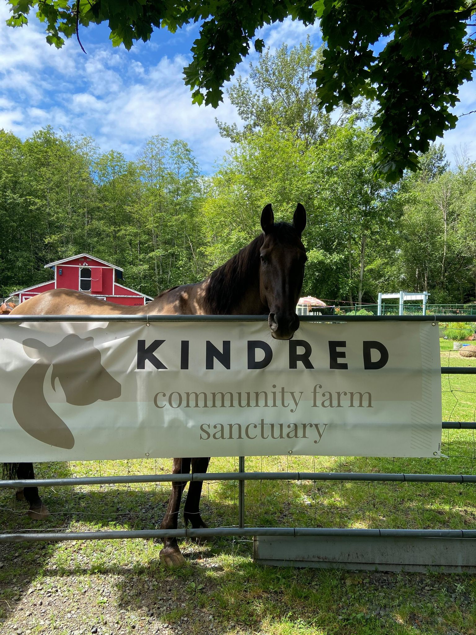 """Badger poses with his head in front of a white sign reading """"Kindred Community Farm Sanctuary"""""""