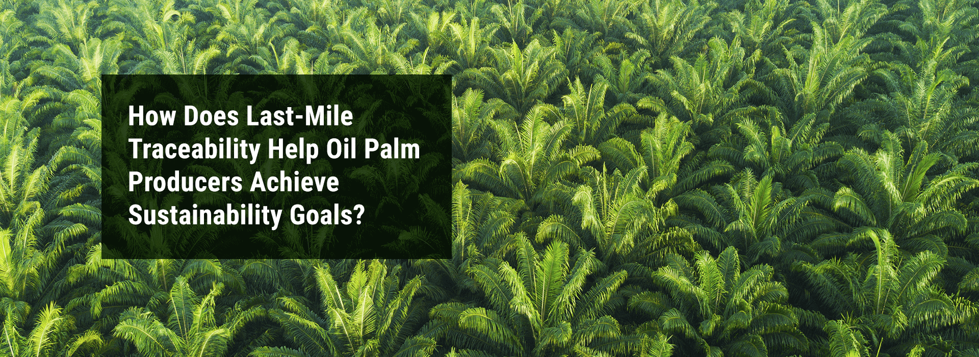 "Banner Image: ""How Does Last-Mile Traceability Help Oil Palm Producers Achieve Sustainability Goals?"""