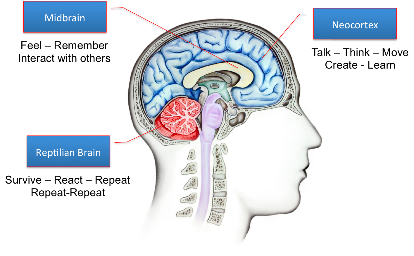 A brief overview of the developing brain: How you can help