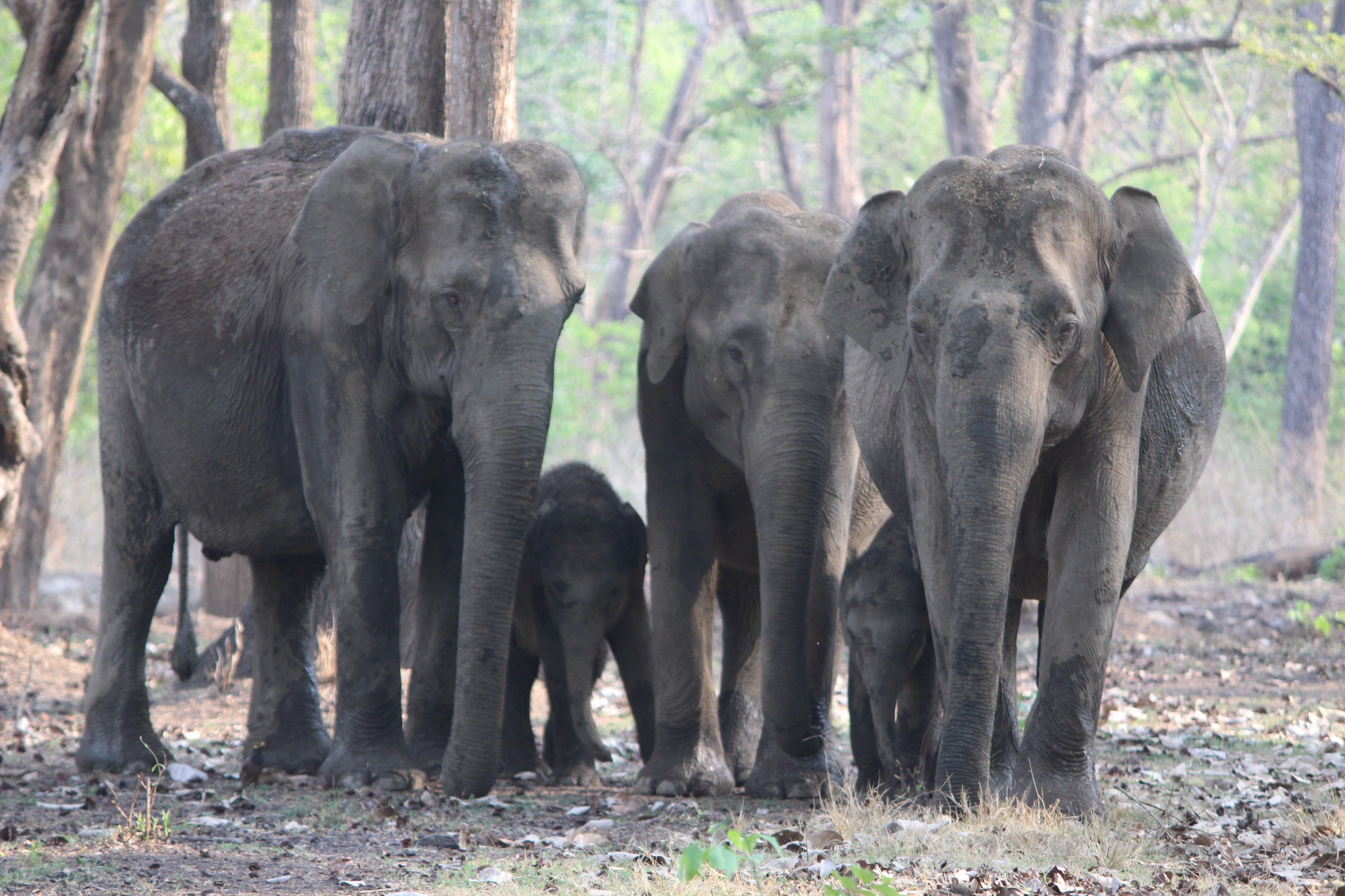 A herd of elephants with the young and old in the middle.