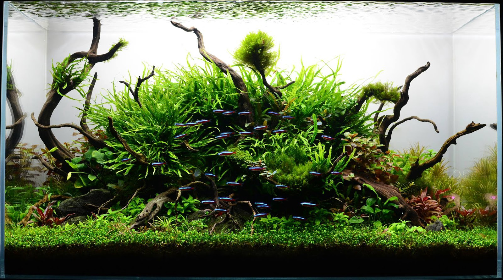 Aquascape Ideas Driftwood Only Aquascape