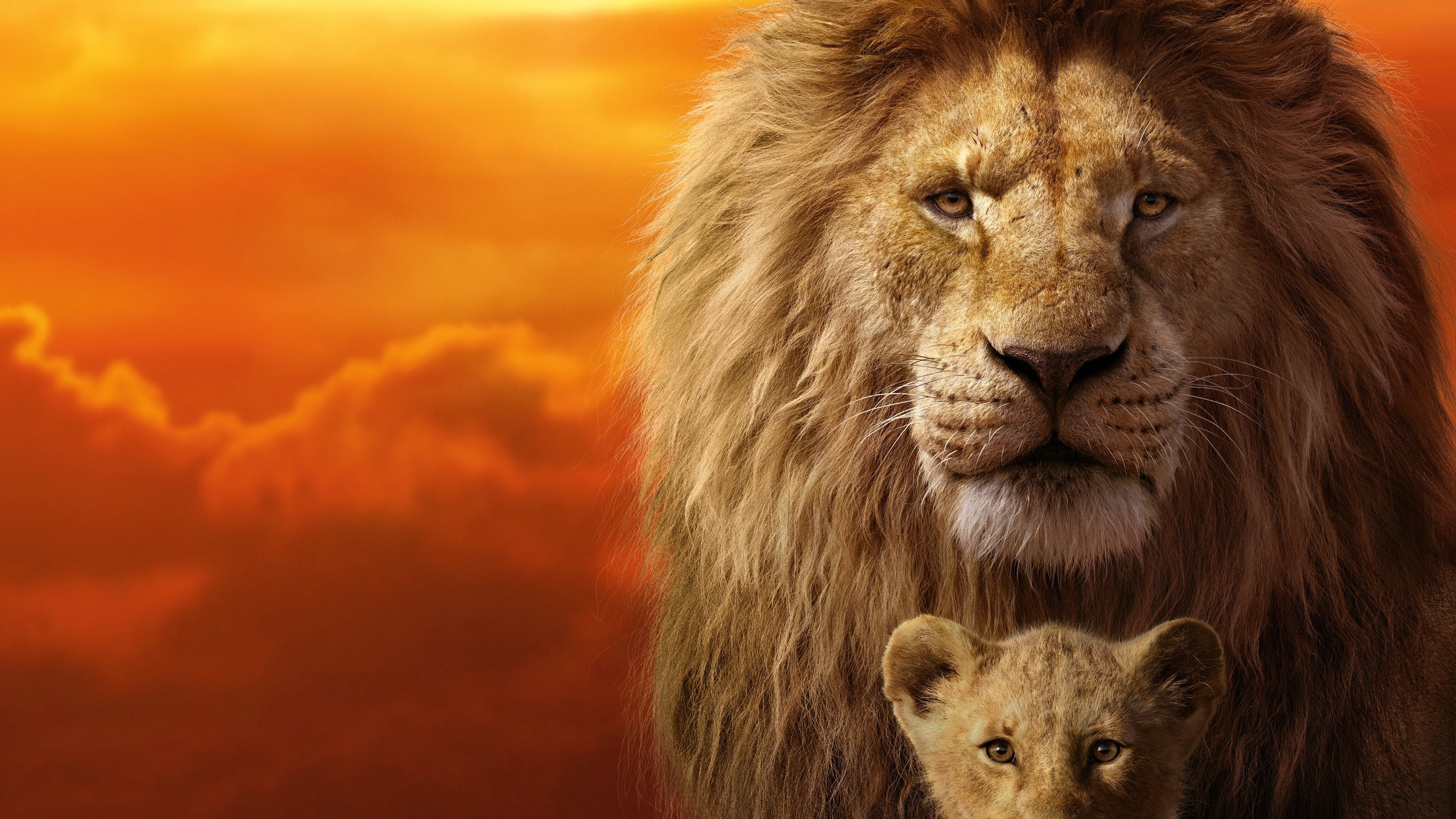 The Lion King 2019 Movies Review Dsy Chy Medium
