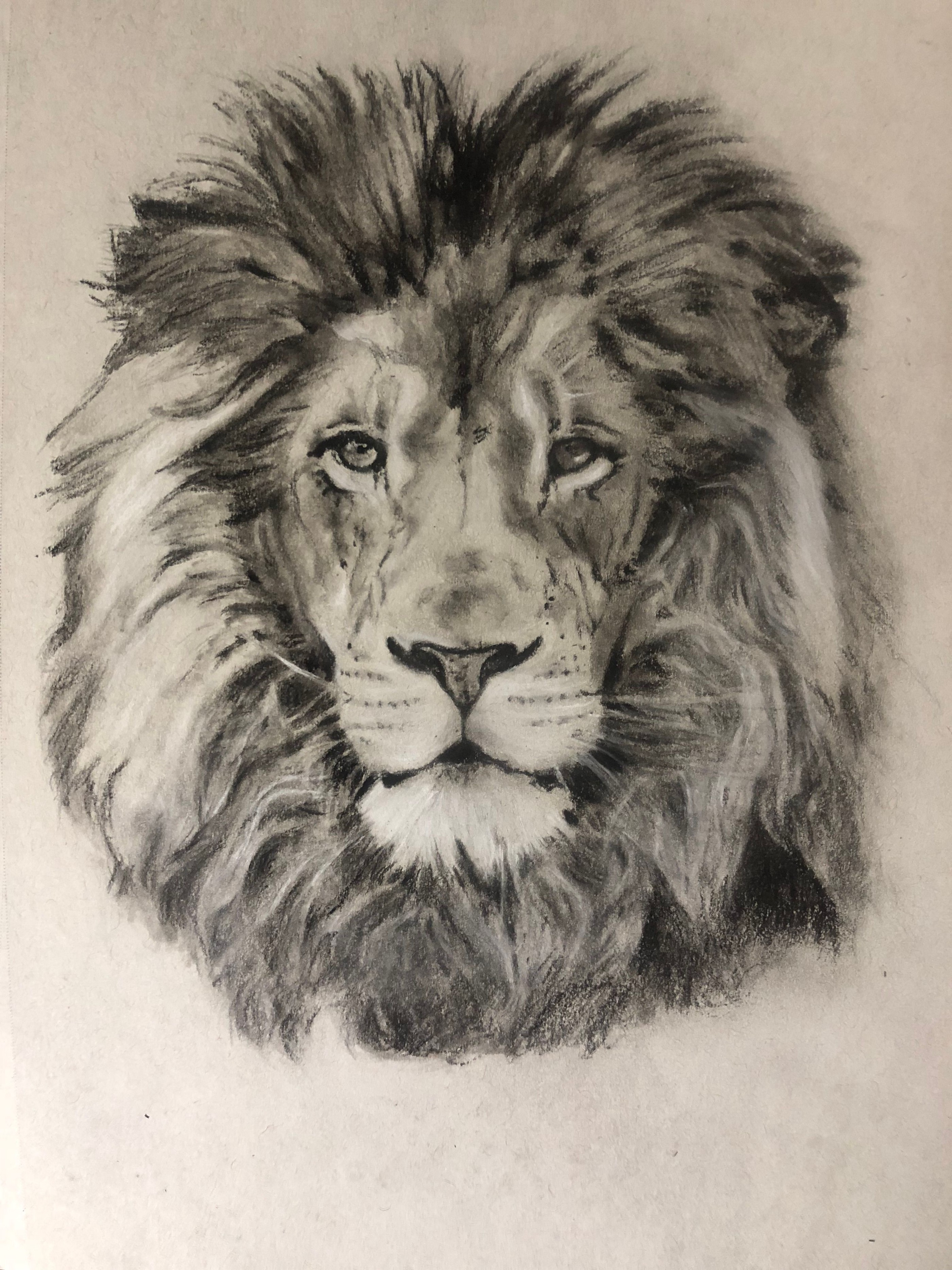 How To Draw A Lion Art For Kids Hub