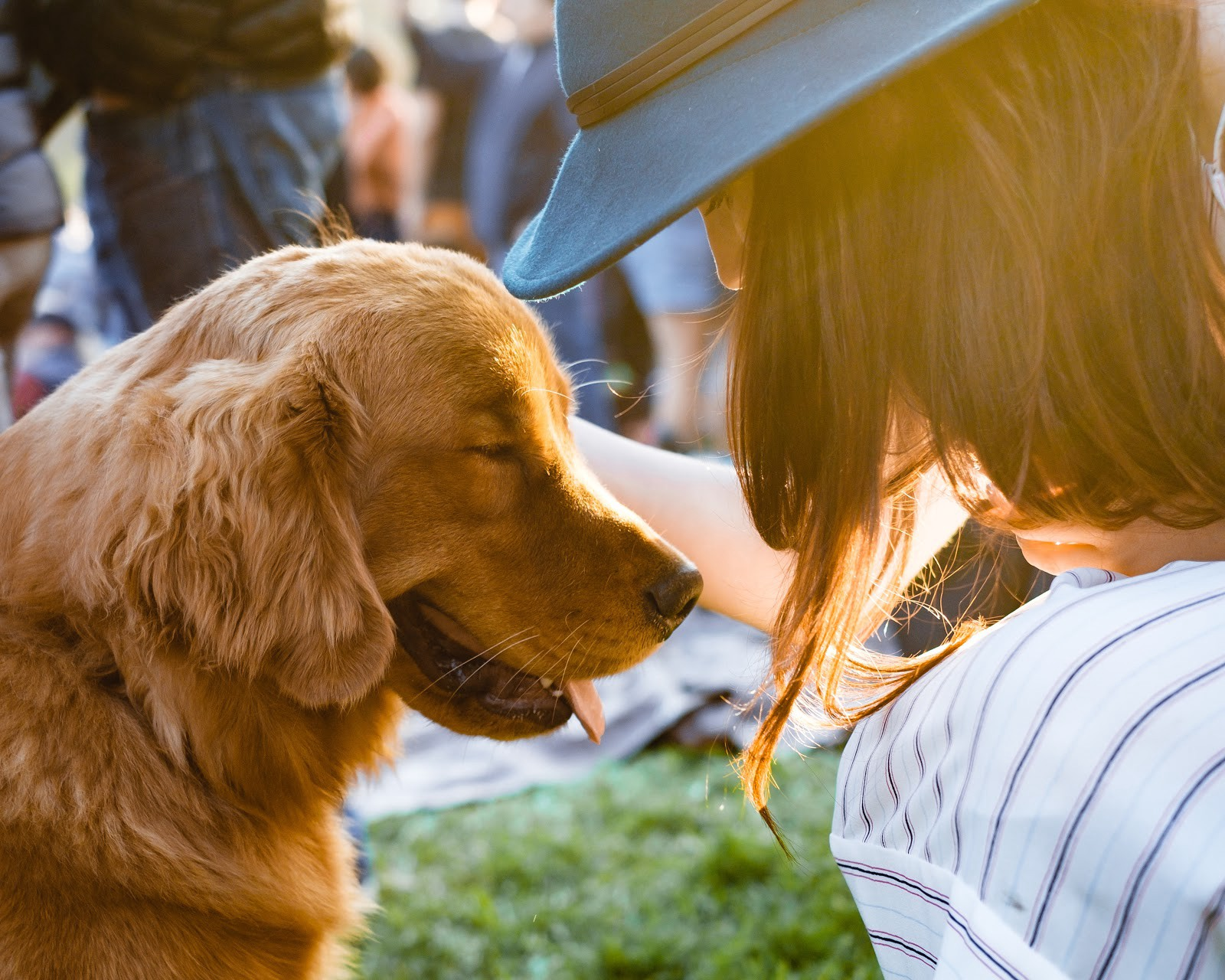 Cannabis products are moving into pet industries too! Your furry friend can now also reap the benefits of cannabis.