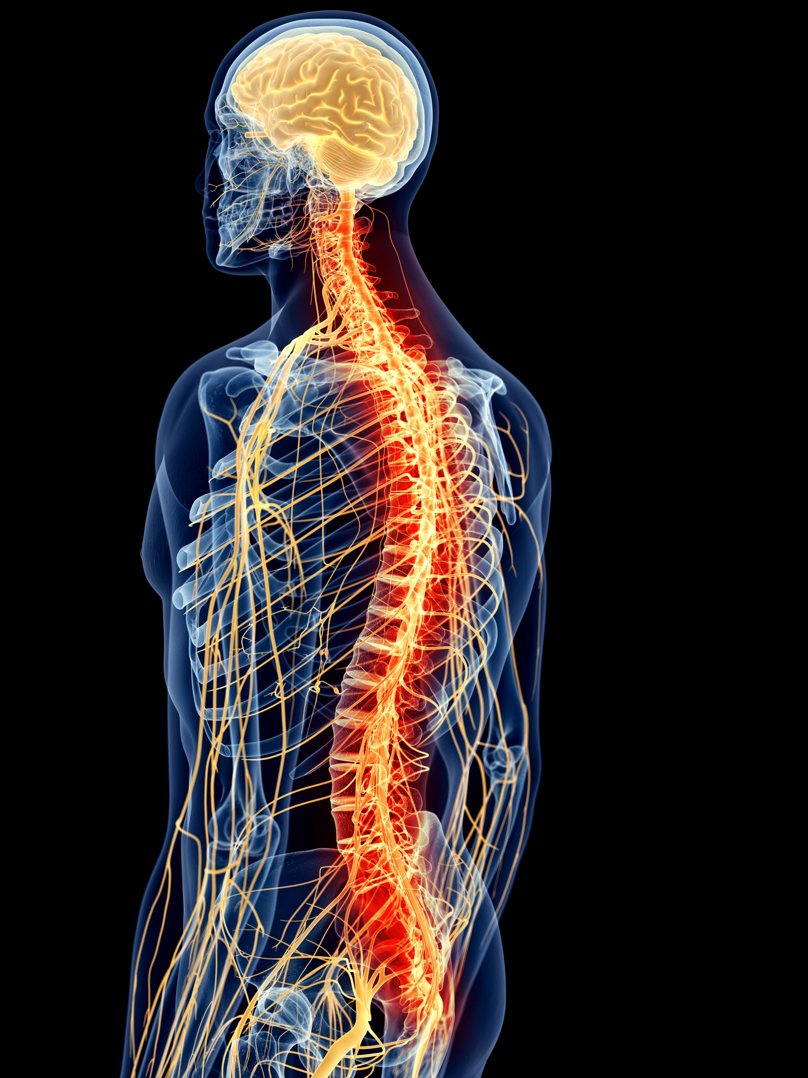 Treating the wounded: neuroprotection strategies in spinal