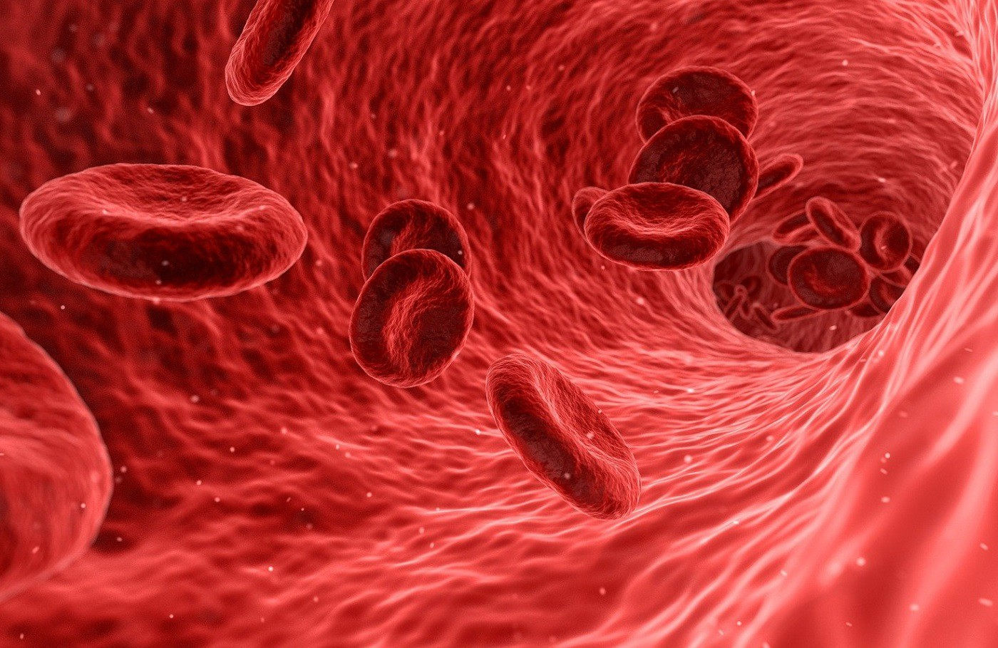 Photo on blood cells in the bloodstream relating to COVID-19 infection based on blood type.