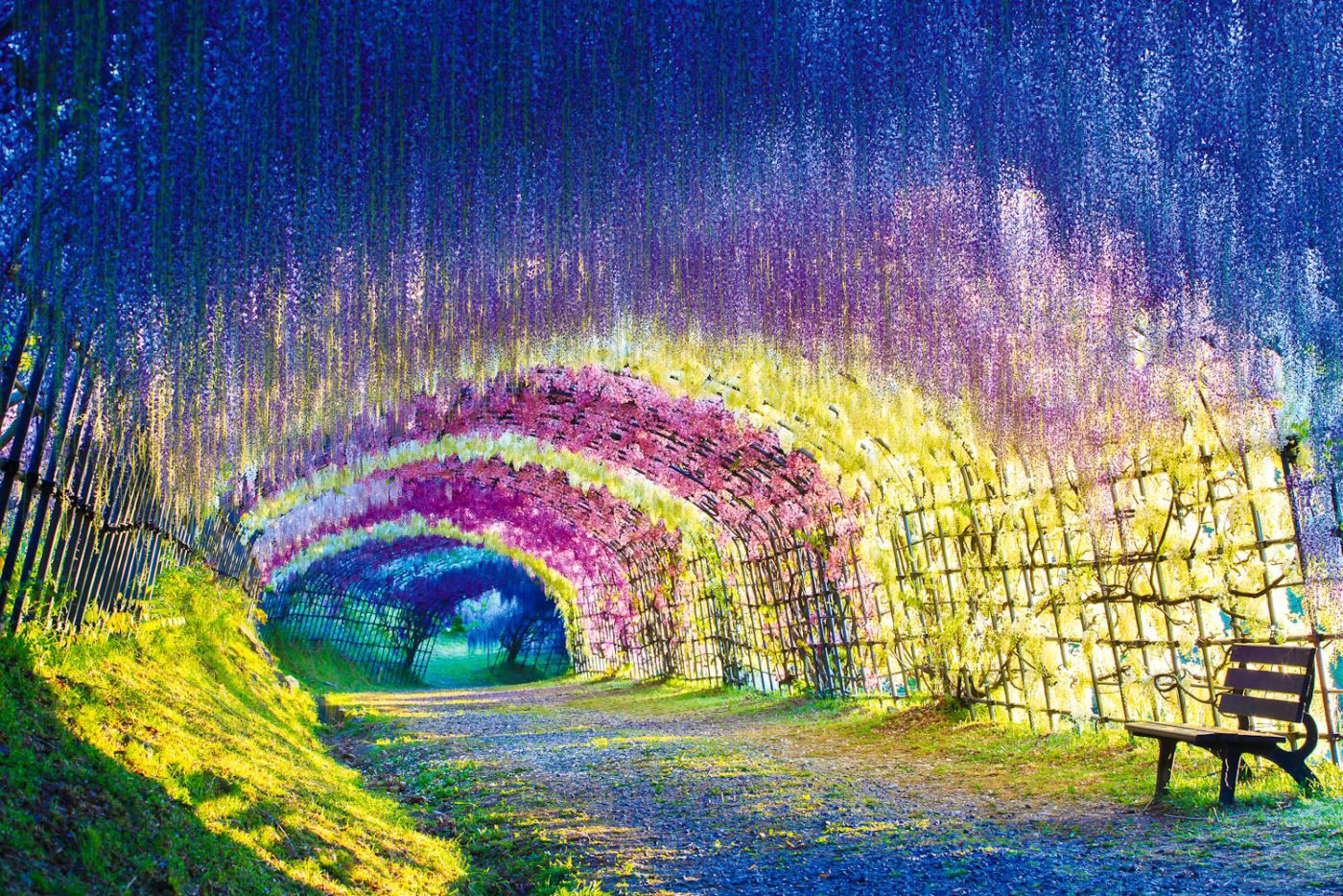 Japan S Wisteria Flower Tunnel Is Like Walking Through A Rainbow