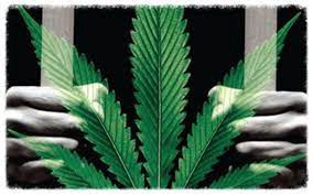 An image of a person's hands clutching prison bars with the marijuana leaf at the forefront