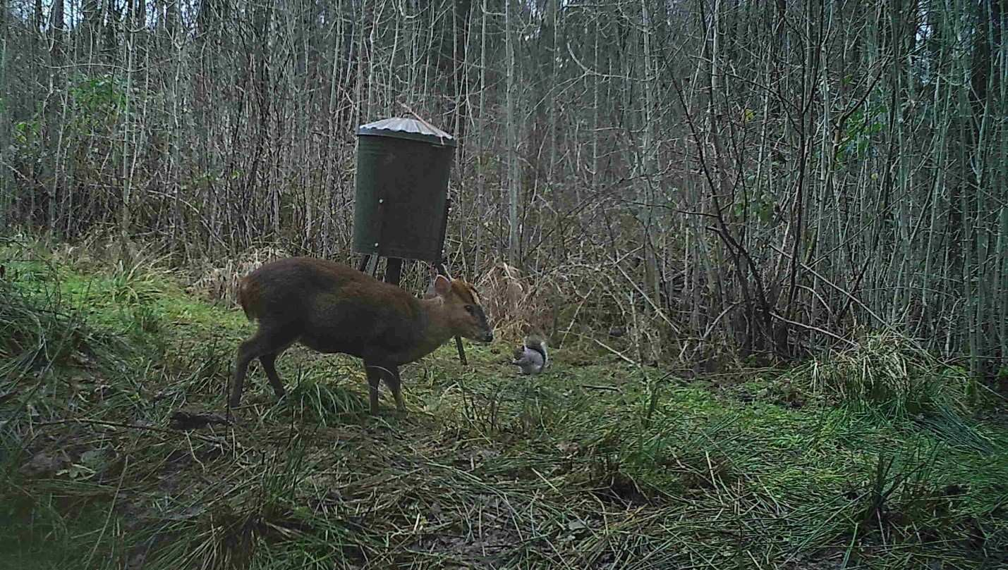 A game camera should take a picture almost instantaneously.