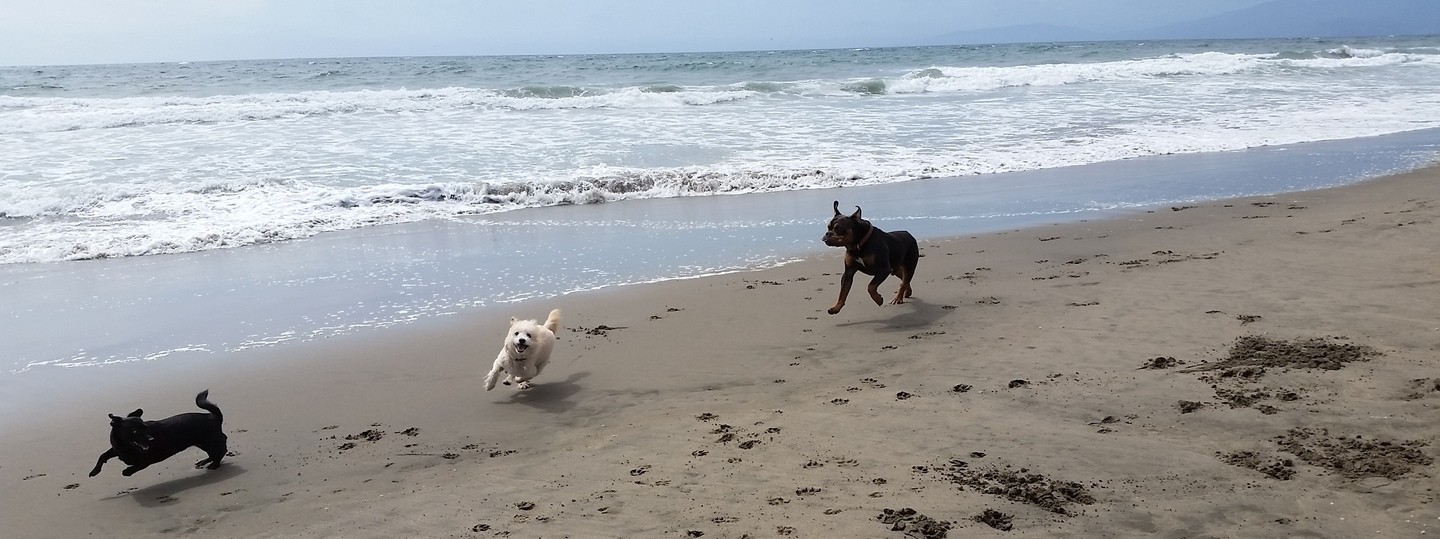Our dogs running on the shoreline at Ocean Beach