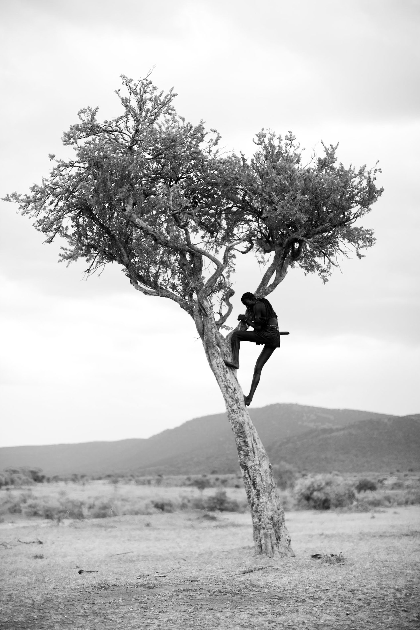 A warrior climbs an acacia tree after spear-throwing practice goes awry.