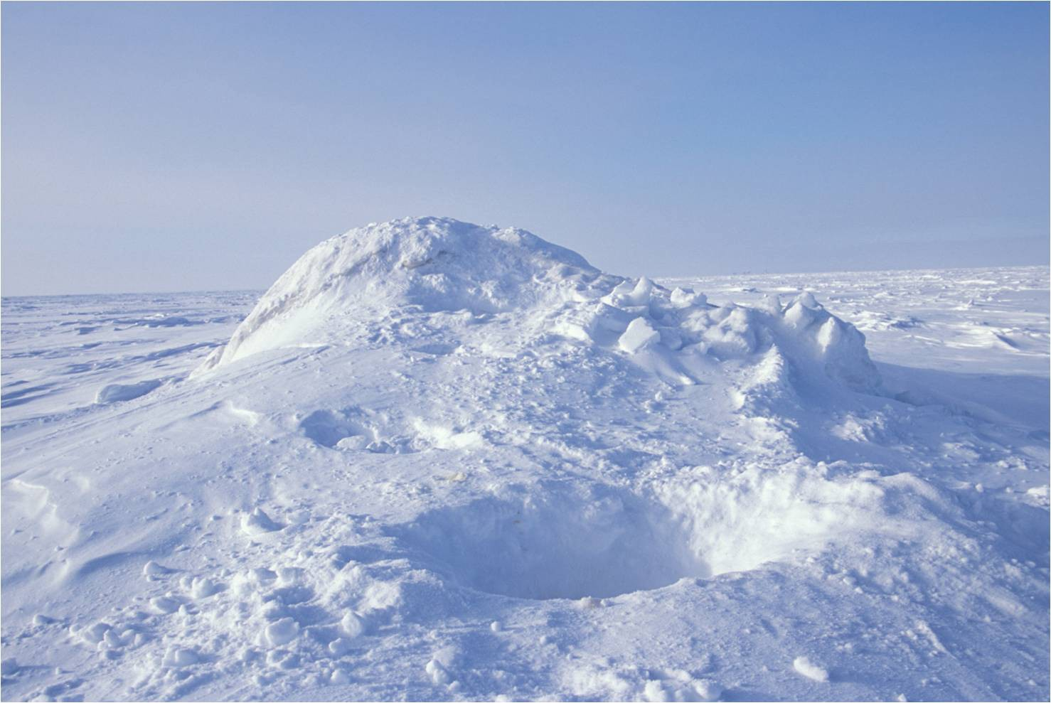 View from the surface of a dome of snow with recently excavated snow at the entrance of a den.