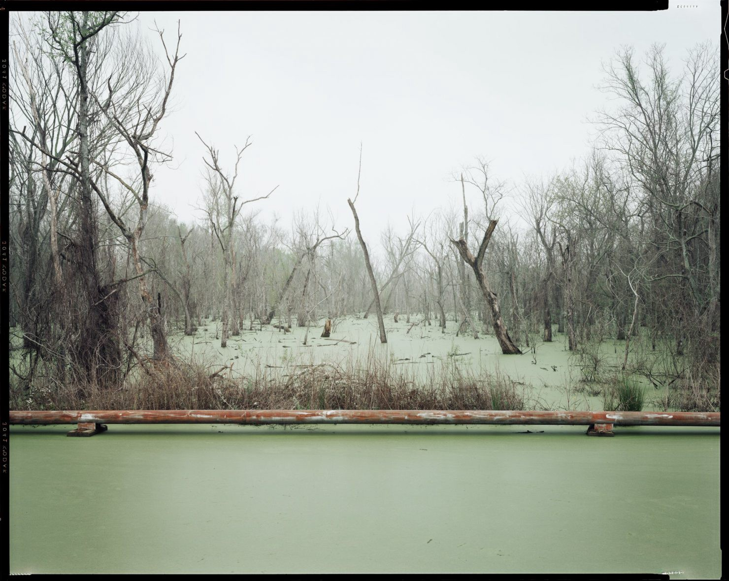 A swampy scene with a pipe running horizontally and trees poking up through the water.