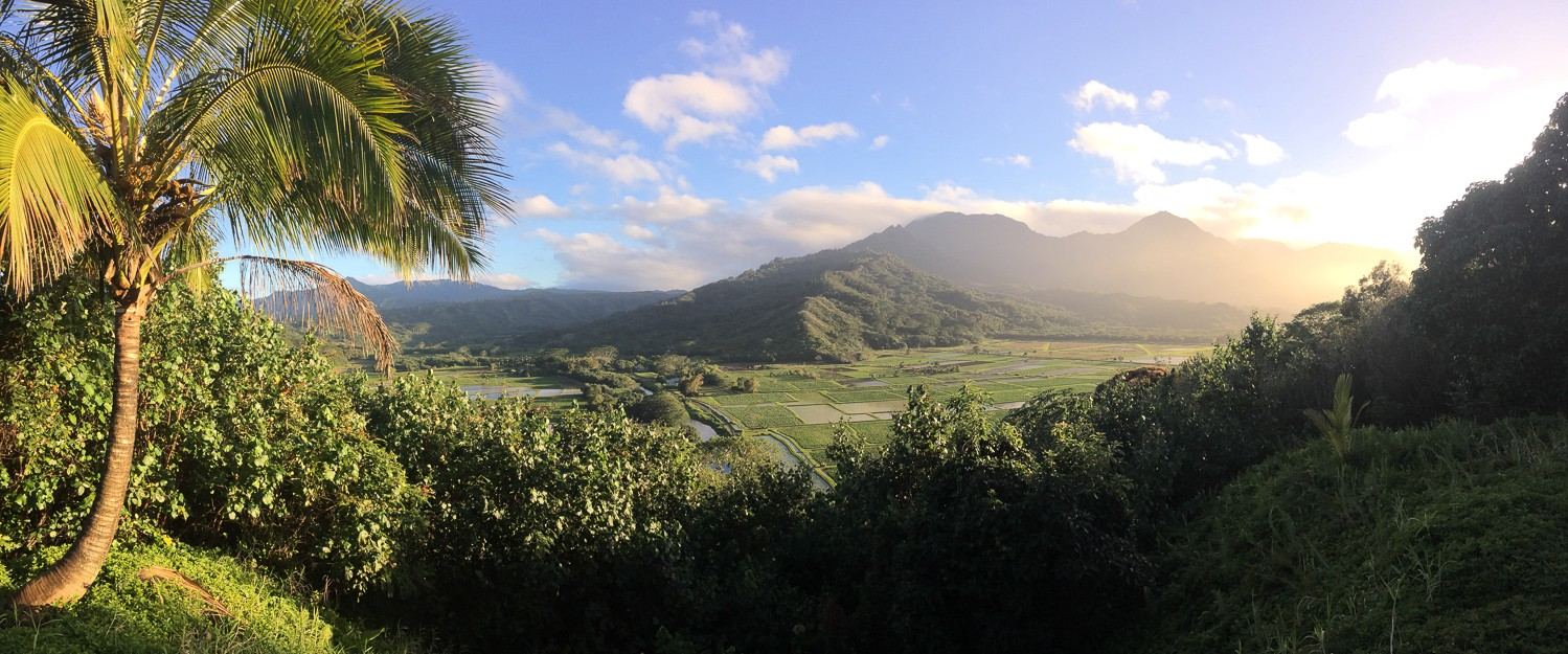 sunset over a field in Hawaii
