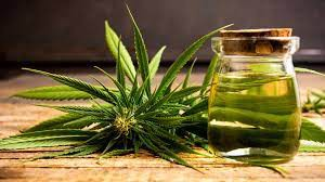 A picture of a marijuana plant and a jar of seemingly CBD oil