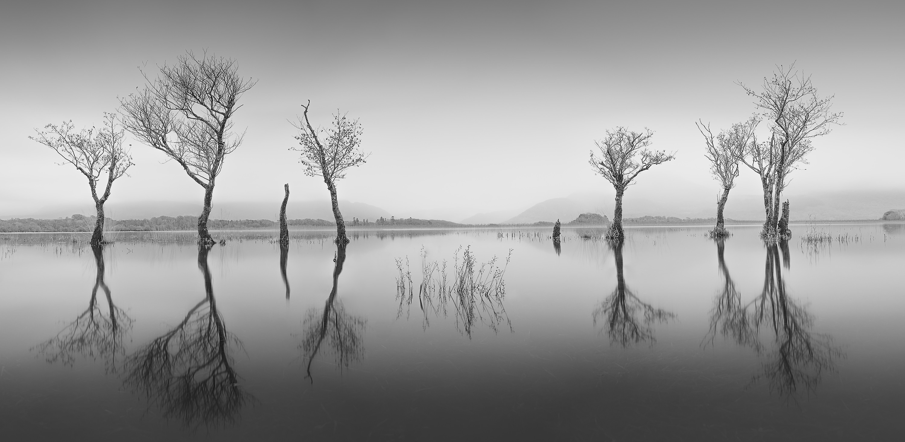 A still, white body of water landscape dotted with black, barren trees mirrored perfectly in the reflection below