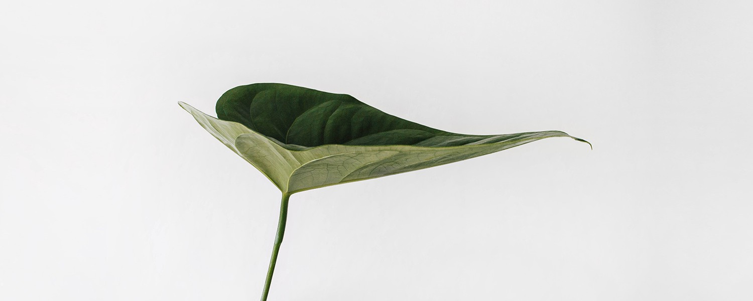A single green leaf on a grey background