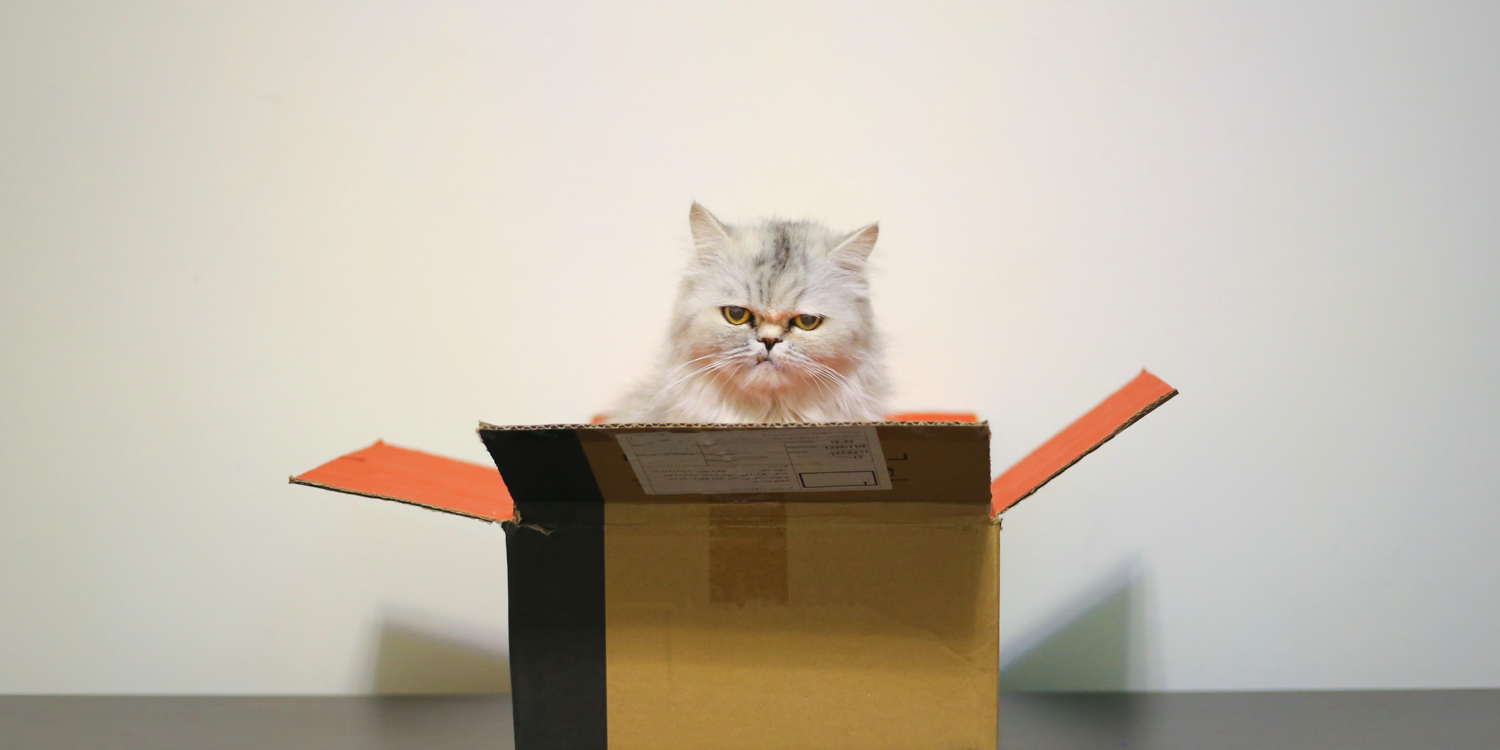 Image of a cat popping out of a box.