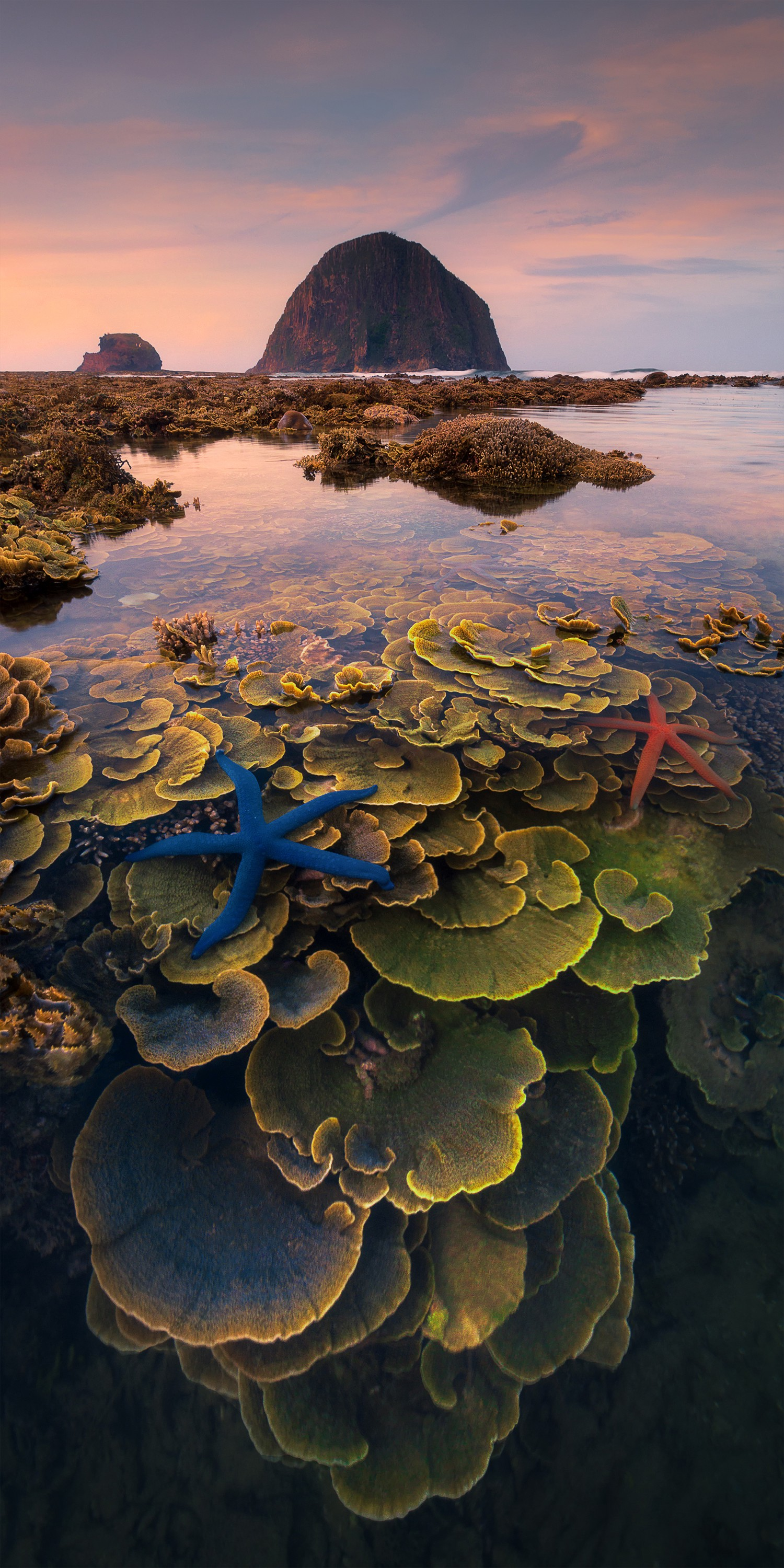 Big, beautiful plants growing in crystal clear water, dotted with bright blue and orange starfish near the surface