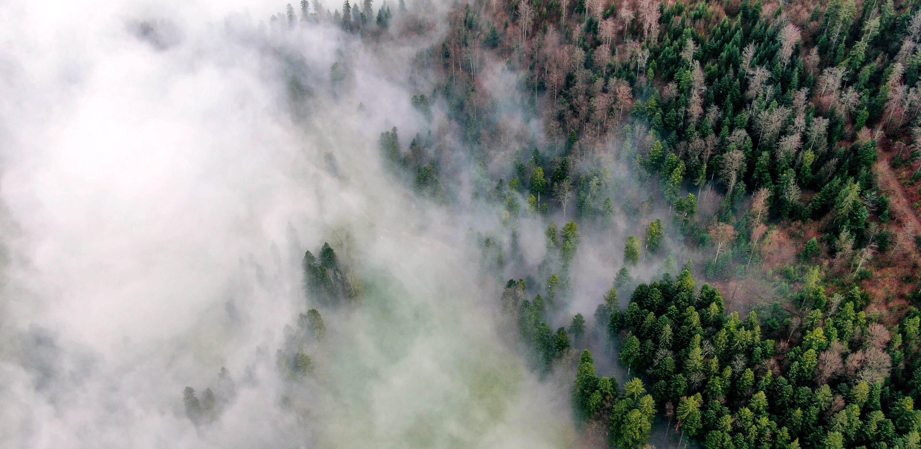 Aerial view of trees amid smoke or fog.