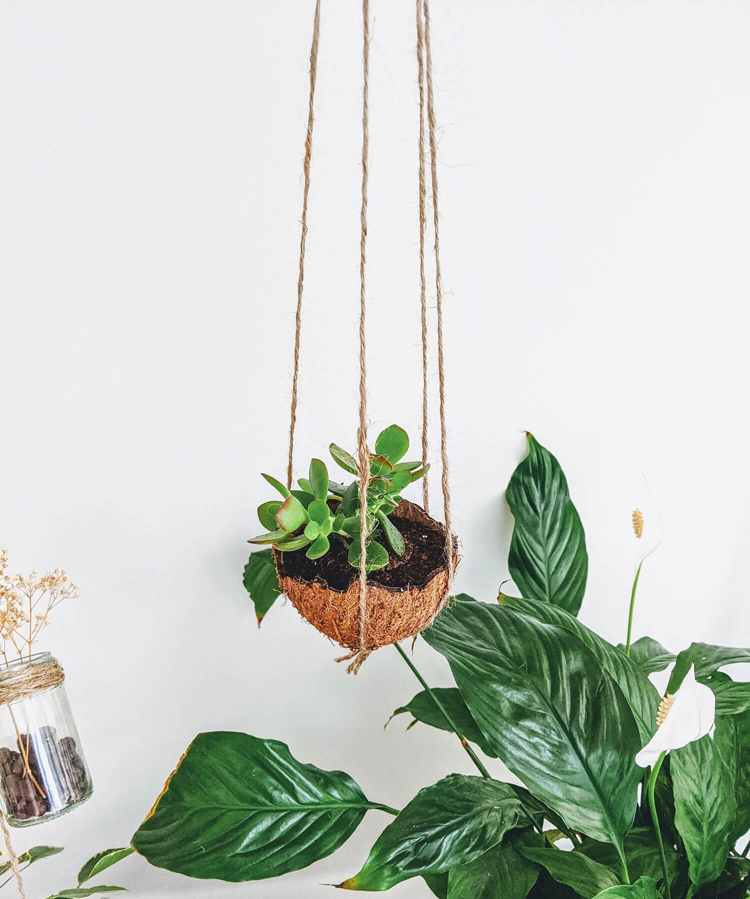 hanging coconut planer hanging above peace lily plant