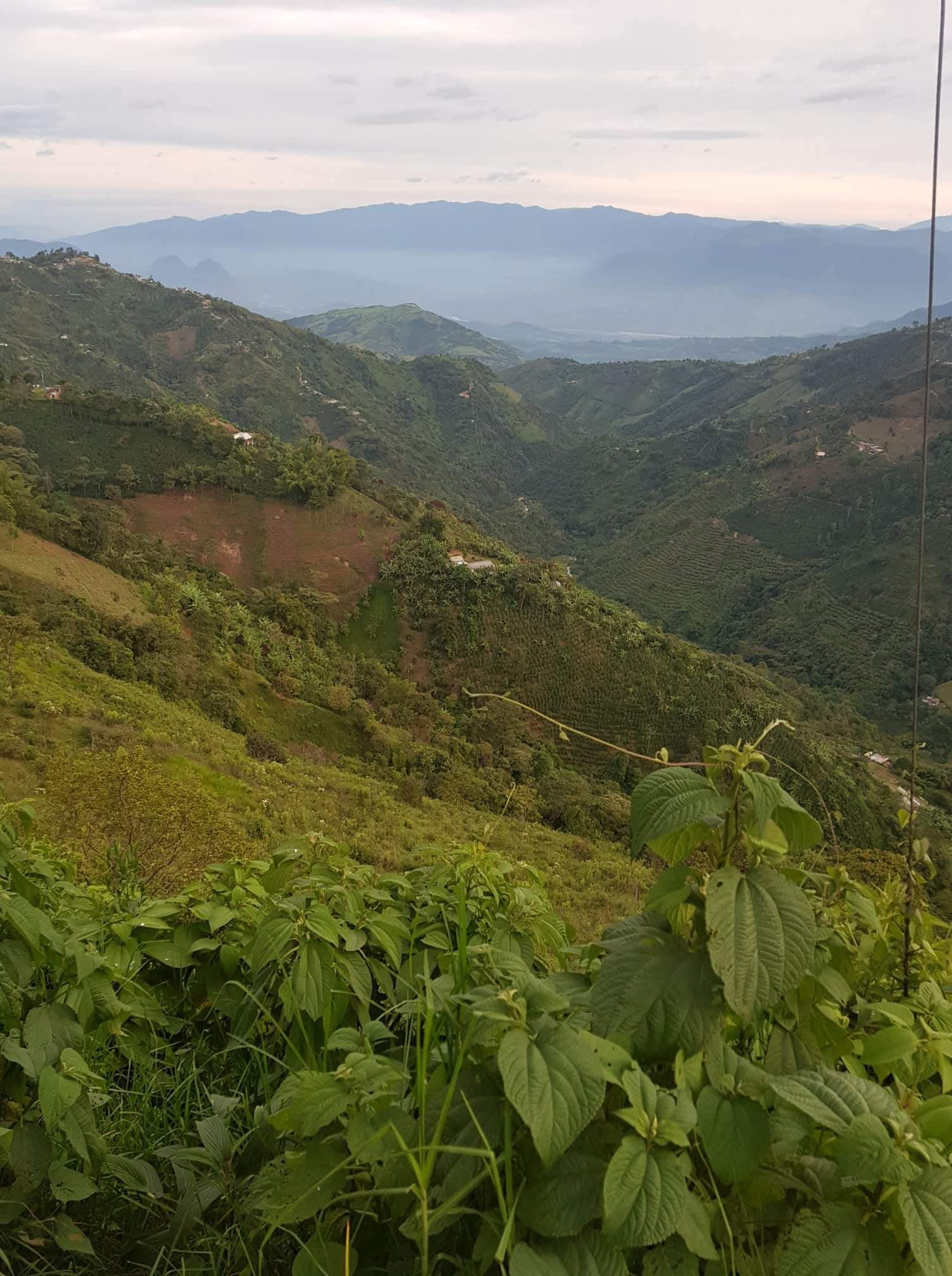 The jungle on the foothills of The Andes in Colombia
