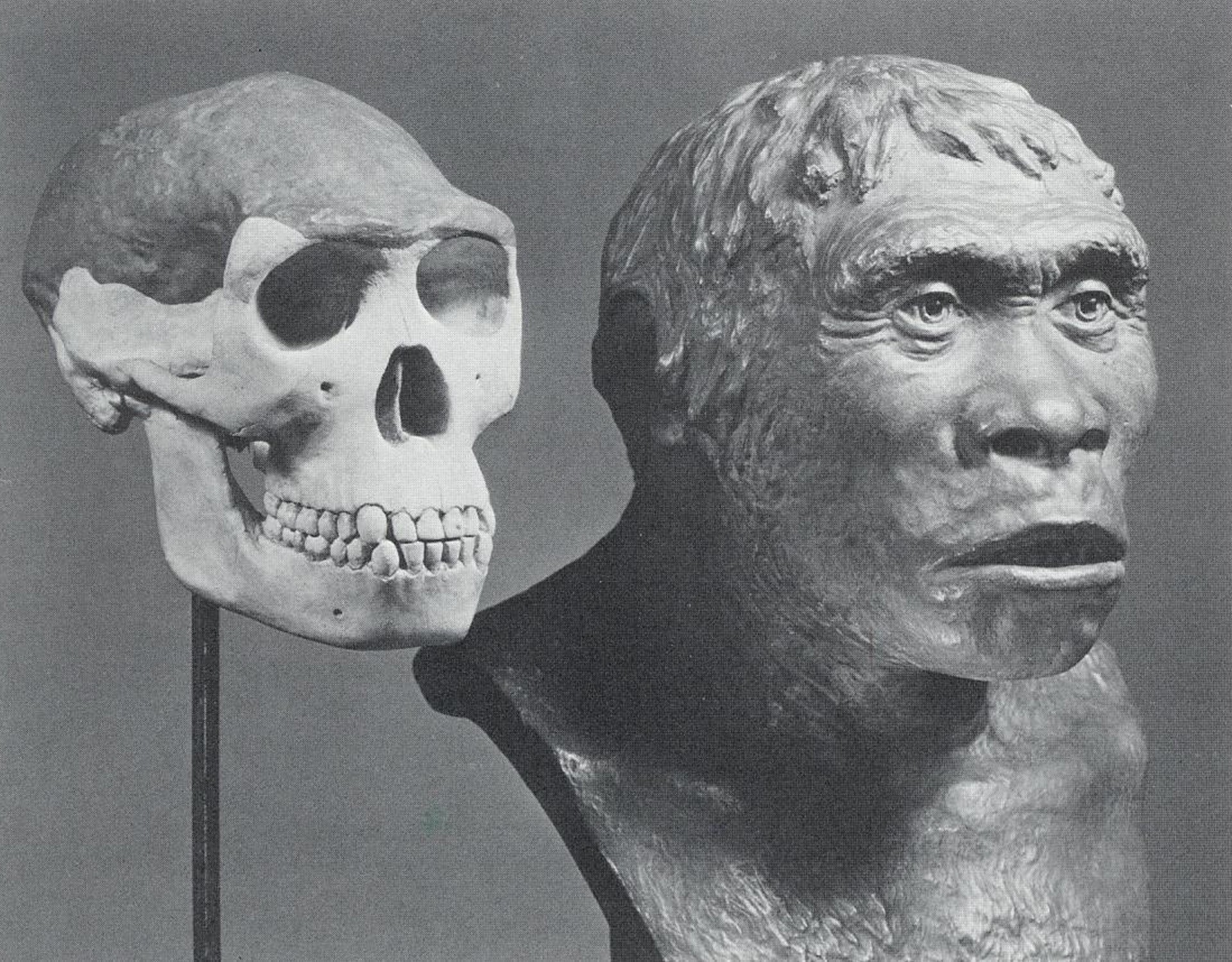 "A recreation of the so-called hoax ""Piltdown Man"""