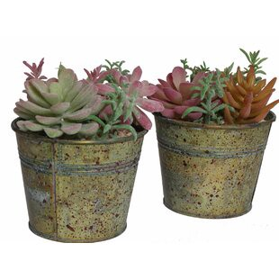 2 Piece Mixed Succulent Plant In Pot Set By Williston Forge Onsales Discount Prices By Lorna Medium