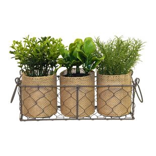 3 Piece Farmhouse Herb And Succulent Plant In Basket Set By Orren Ellis Onsales Discount Prices By Steven Medium