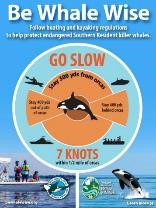 Graphic of distances boats should stay back if Southern Resident Killer Whales are nearby