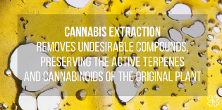 Cannabis Extractions: The Complete Guide - Lucie Zavřelová - Medium