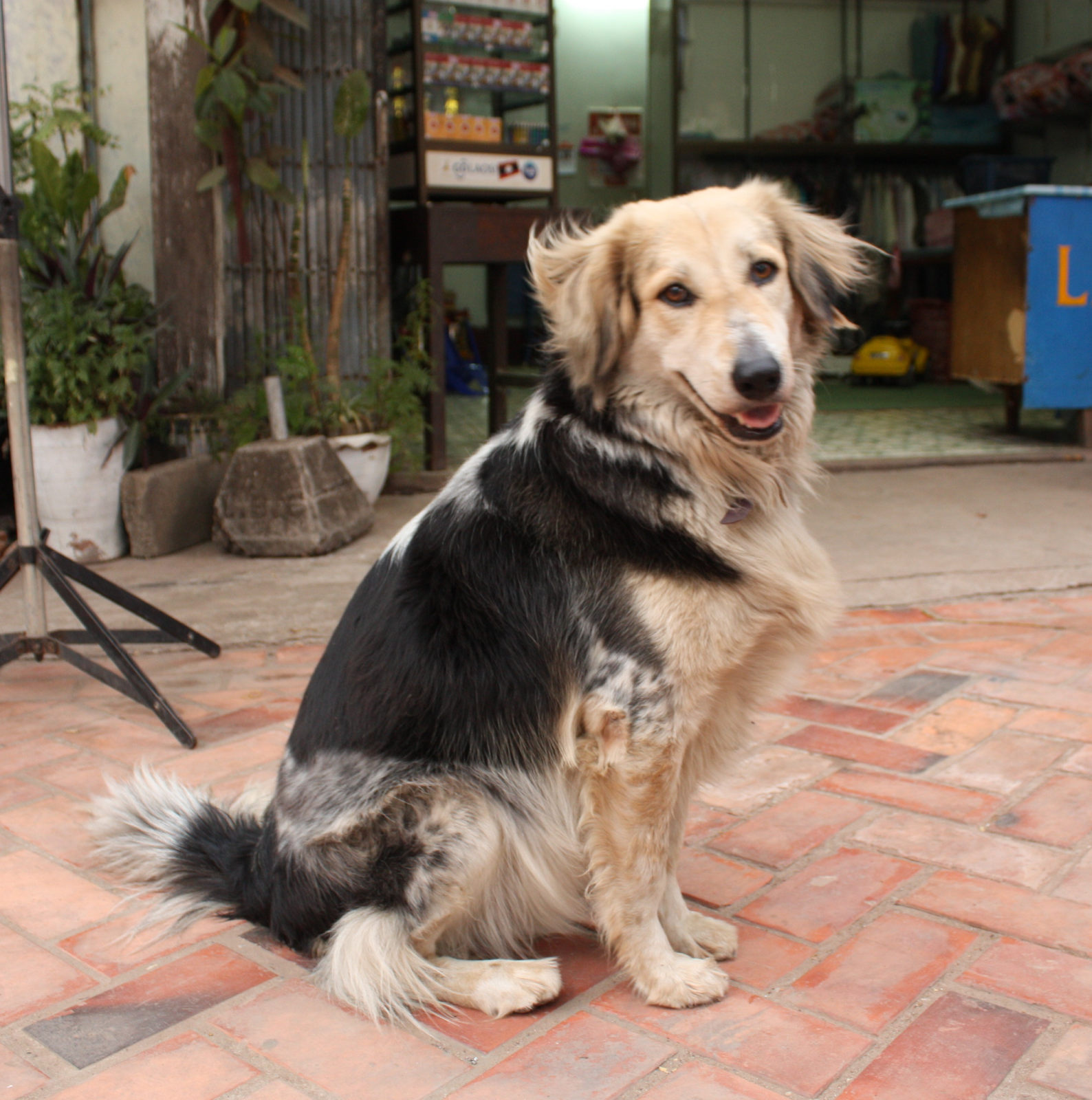 An image of a mixed breed dog