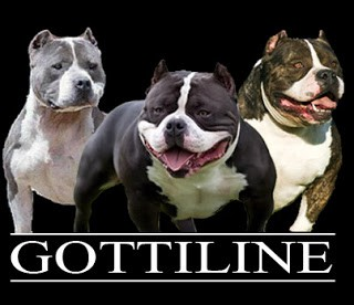 The History Of Notorious Juan Gotty & Gottiline - BULLY KING