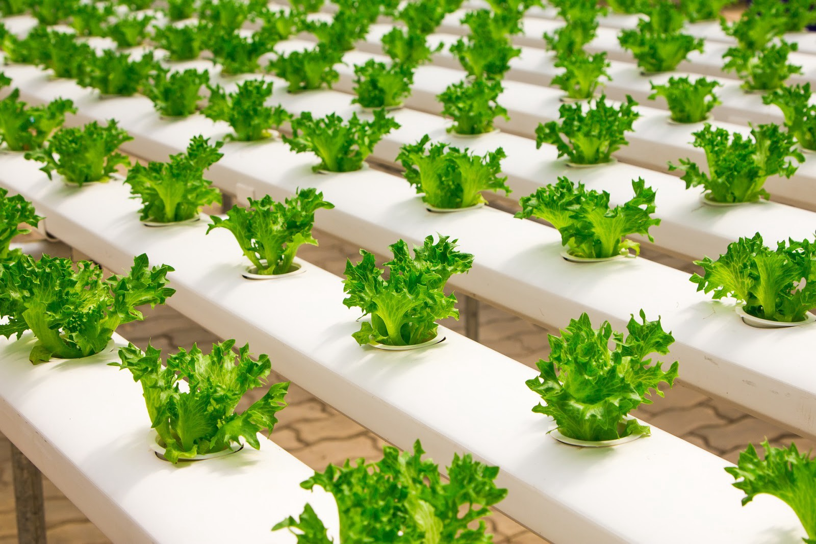 Hydroponic gardening: The future of cannabis cultivation