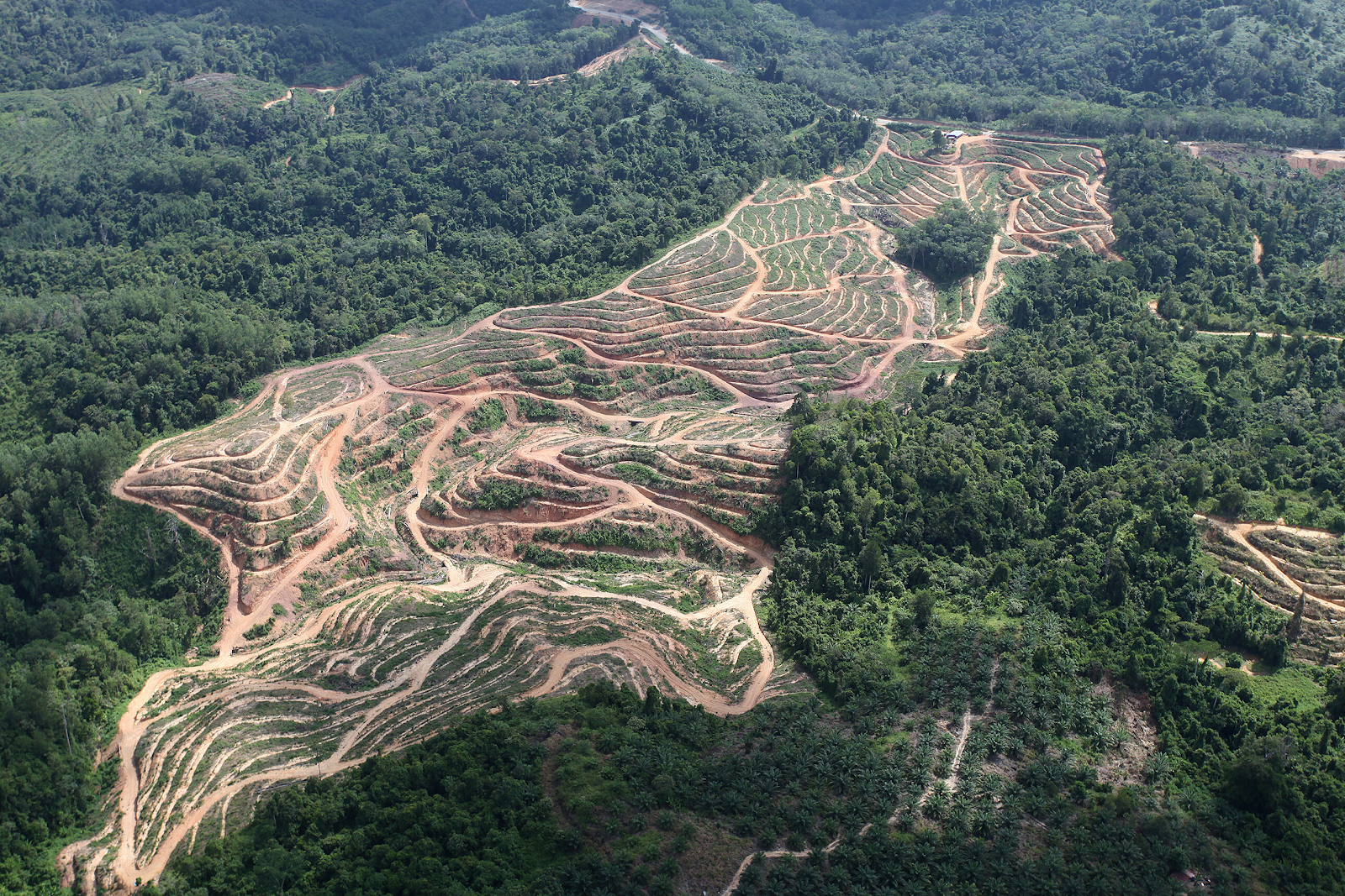 Aerial view photo of forests in Malaysia being cleared for oil plantations.