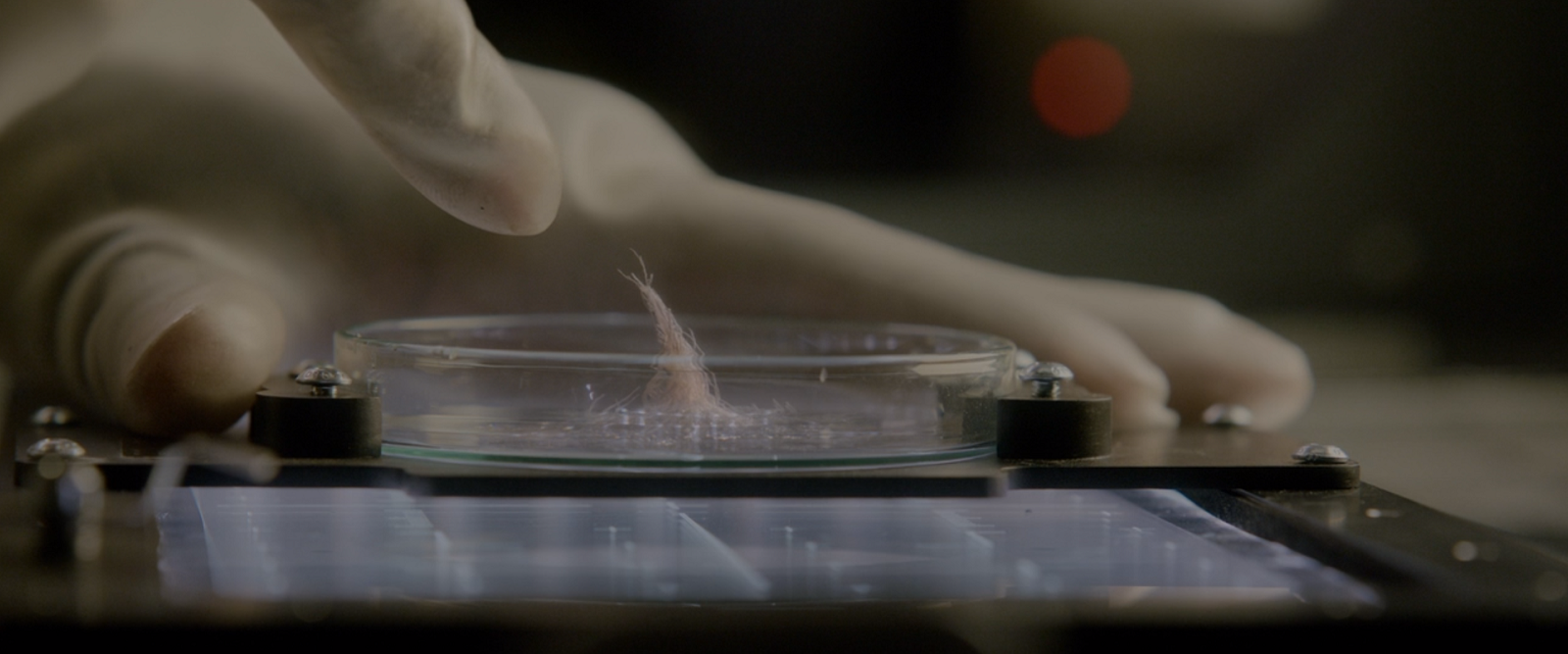 A specimen in a petri dish leaning toward someone's hand in a rubber glove