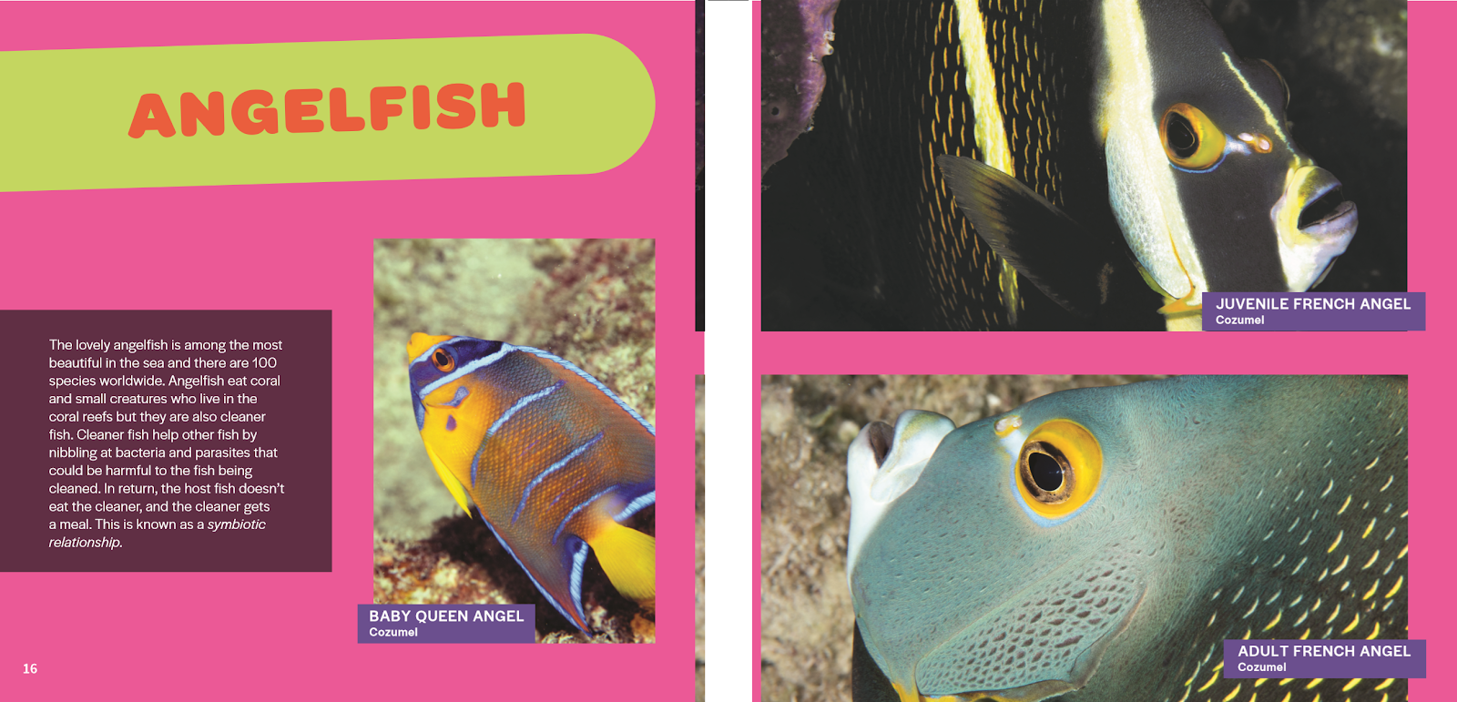 all fish faces, kids book, kids picture book, new release, new kids book