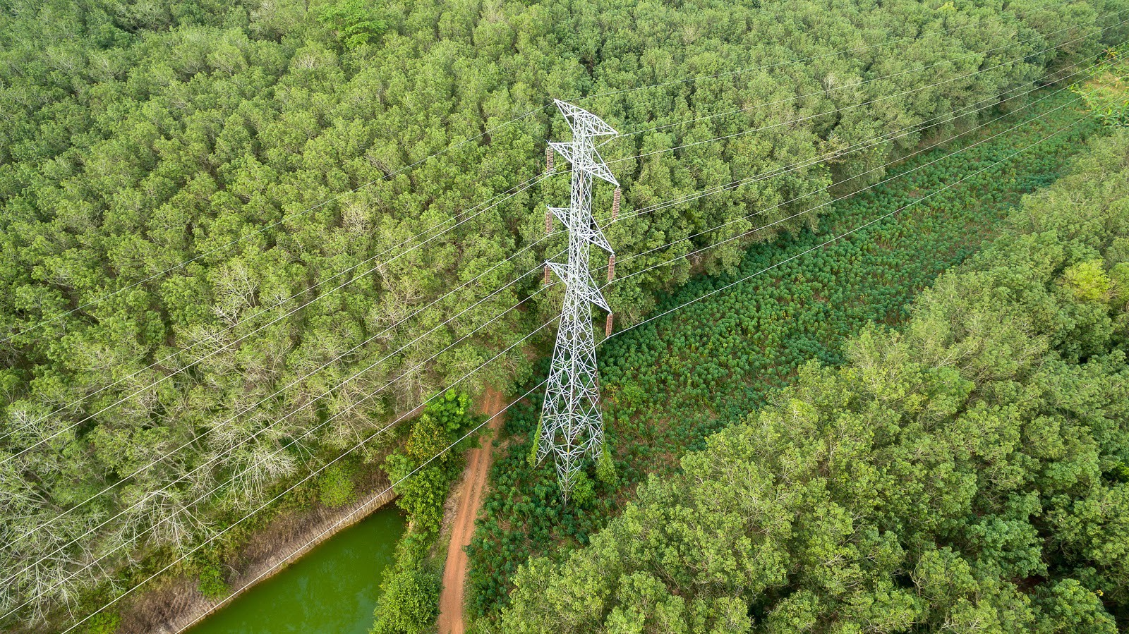 Transmission tower in forest area