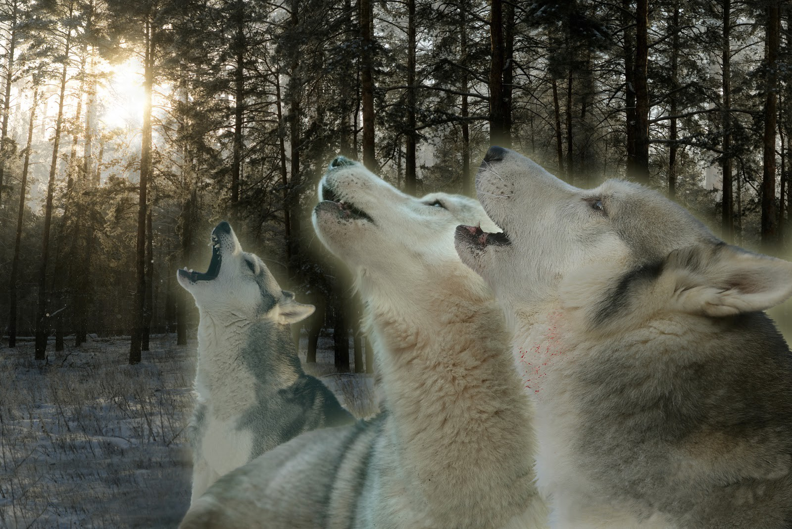 Howling at the Moon: Communication and Connection for