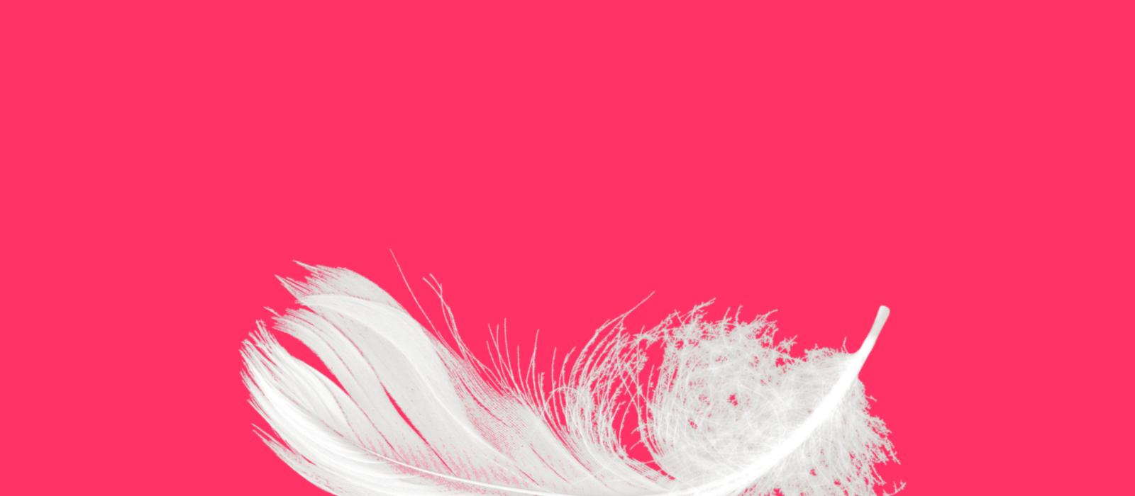 This is a photo of a white feather.